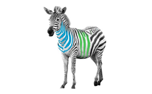 zebre-venetis